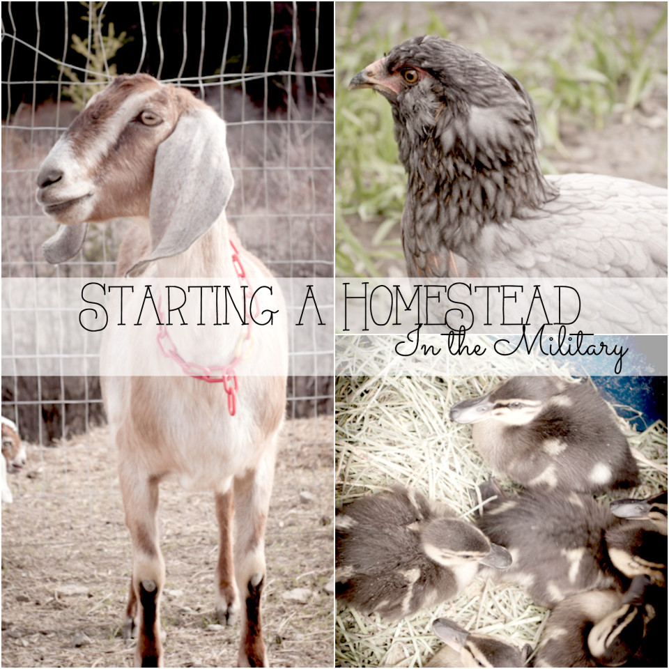 Homesteading Series: Starting Up A 3-4 Year Homestead